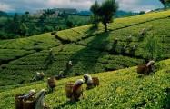 Десятка причин отдохнуть на Шри Ланке!